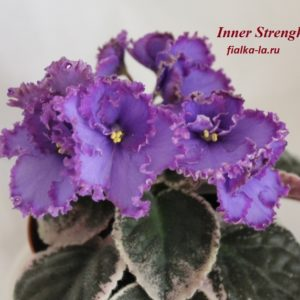 Inner Strength (Sorano)