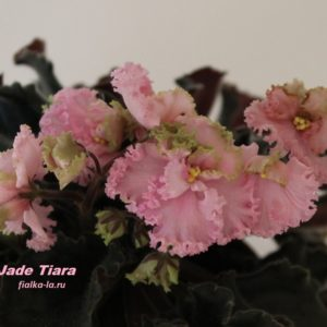 Jade Tiara (Sorano)