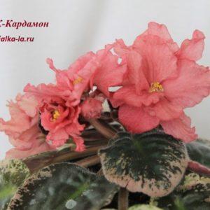 К-Кардамон (Крайдуба Е.)