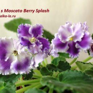 K's Moscato Berry Splash