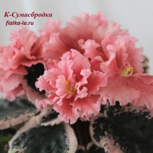 К-Сумасбродка (Крайдуба Е.)