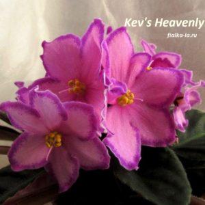 Kev's Heavenly Star (Degner)