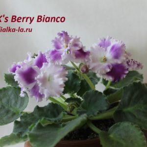 K's Berry Biancо (K. Hajner)