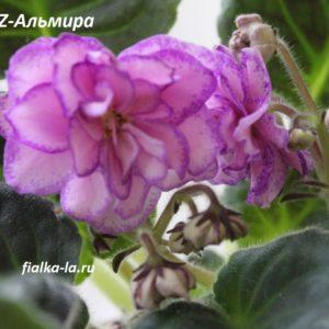 KZ-Альмира (Заикина И.)