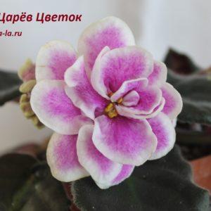 KZ-Царёв Цветок (Заикина И.)