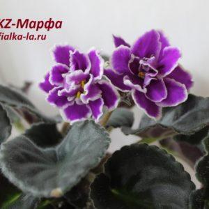 KZ-Марфа (Заикина И.)