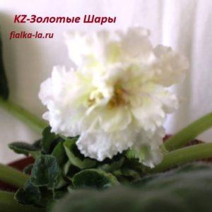 KZ-Золотые Шары (Заикина И.)