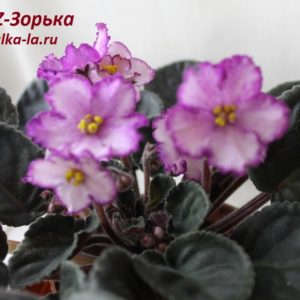 KZ-Зорька (Заикина И.)