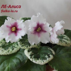 ЛЕ-Алиса (Лебецкая Е.)