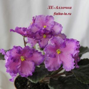 ЛЕ-Аллочка  (Лебецкая Е.)