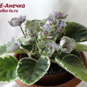 ЛЕ-Анечка (Лебецкая Е.)