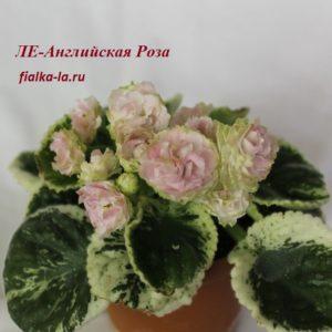 ЛЕ-Английская Роза (Лебецкая Е.)