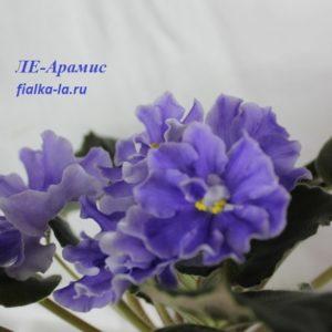 ЛЕ-Арамис (Лебецкая Е.)