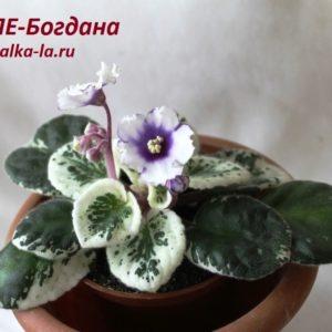 ЛЕ-Богдана (Лебецкая Е.)