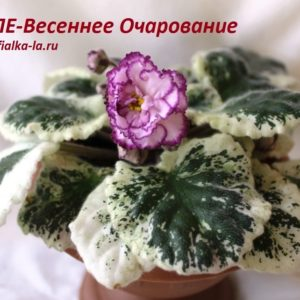 ЛЕ-Весеннее Очарование (3-20) (Лебецкая Е.)