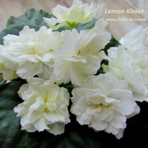 Lemon Kisses (Sorano)