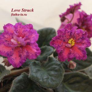 Love Struck (Sorano)