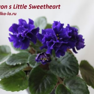 Little Sweetheart (Sorano)
