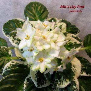 Ma's Lily Pad (Robinson)