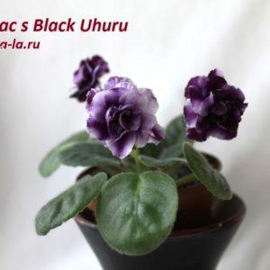 Mac's Black Uhuru
