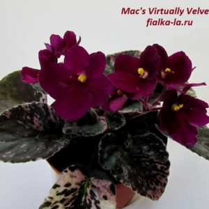Mac s Virtually Velvet