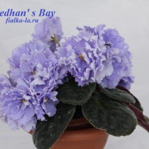 Medhan's Bay