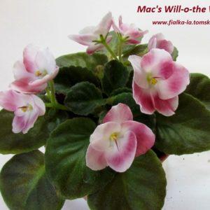 Mac's Will-o-the-Wisp
