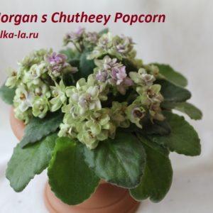 Morgan's Chuthey Popcorn