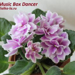 Music Box  Danser (Sorano)