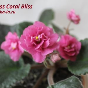 Nes's Coral Bliss