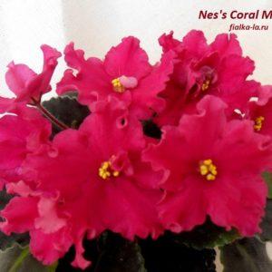 Nes's Coral Magic