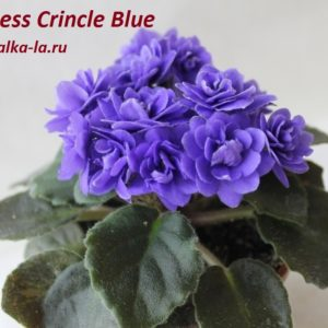 Ness Crinkle Blue
