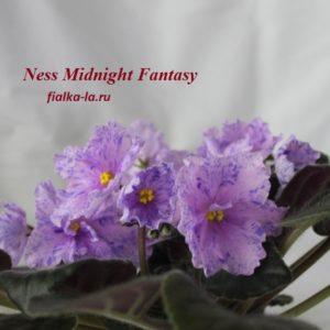 Nes's Midnight Fantasy