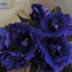 Nightfall (Sorano)