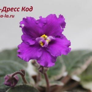 НК-Дресс-Код (Козак Н.)