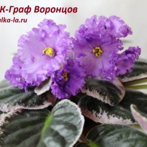 НК-Граф Воронцов (Козак Н.)