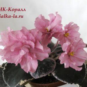 НК-Коралл (Козак Н.)