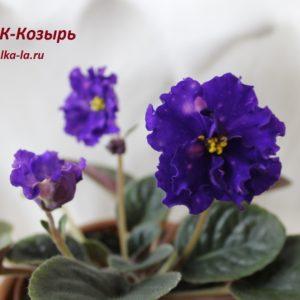 НК-Козырь (Козак Н.)