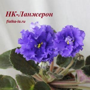 НК-Ланжерон (Козак Н.)