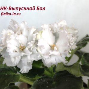 НК-Выпускной Бал (Козак Н.)
