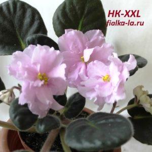 НК-XXL (Козак Н.)