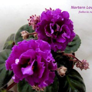 Northern Love (Sorano)