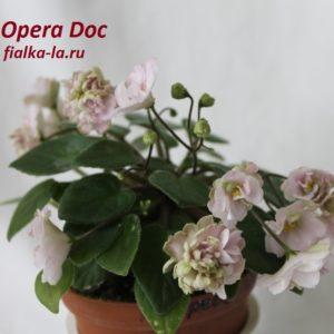 Opera Doc (S.McGaha)