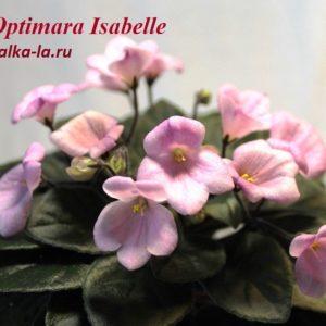 Optimara Isabelle