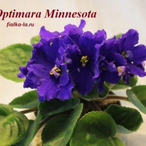 Optimara Minnesota