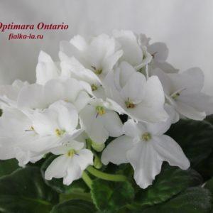 Optimara Ontario