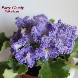 Party Cloudy (Bonne)