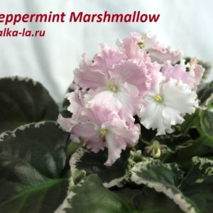 Peppermint Marshmallow (Sorano)