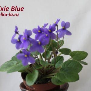 Pixie Blue (L.Lyon)