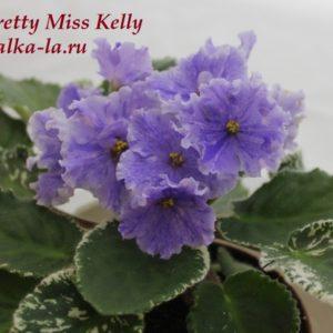 Pretty Miss Kelly (Sorano)